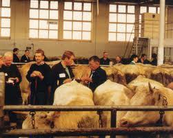Levy et les vaches
